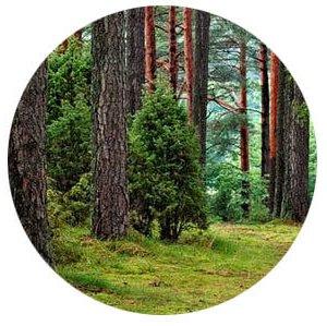 Environment.1